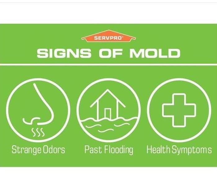 Signs of Mold by SERVPRO of Fairfax, Vienna, and Oakton